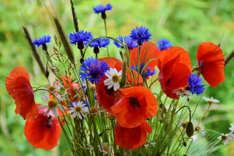 poppy-1431174_960_720