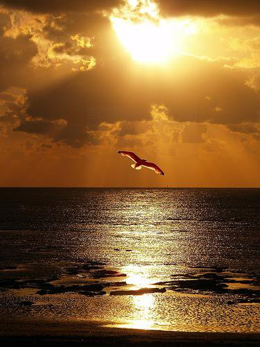 seagul-over-the-sea