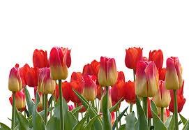 EASTER FLOWERS B